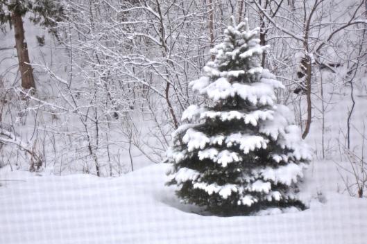 Tree Snow DSC07390